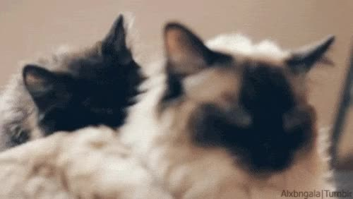 Watch and share Licks GIFs on Gfycat
