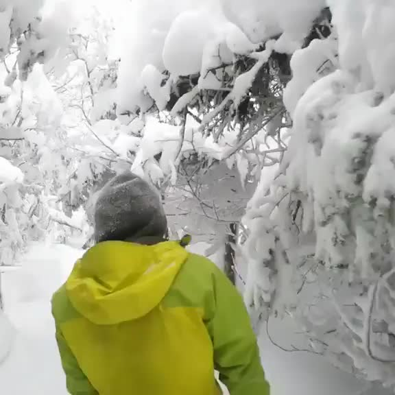 Watch and share Gliding Trough A Frozen Forest's Fresh Snow GIFs by crazyboobs on Gfycat