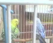 Watch My birds fighting GIF by @zajillani on Gfycat. Discover more Birds GIFs on Gfycat