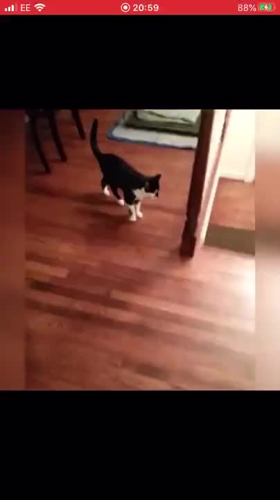 You spin me right around - gif