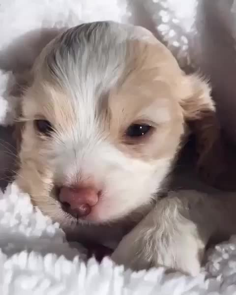 Sleepy pup GIFs