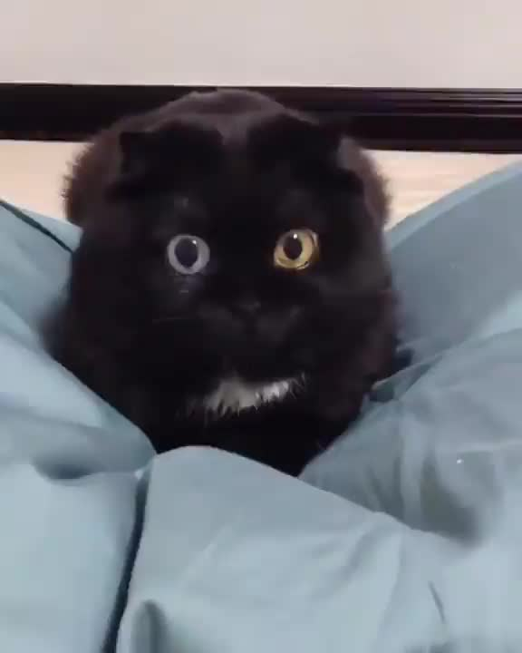 Watch and share Animal GIFs and Cat GIFs by tothetenthpower on Gfycat