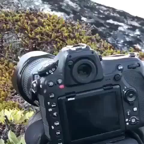 adorable, animal, aww, baby, babyanimal, cute, small, smol, smol animals 🐾, videos, A gorgeous arctic fox finds a new friend GIFs