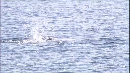 Watch and share Port River Dolphins Frolick GIFs on Gfycat