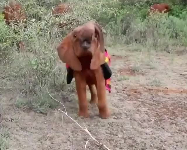 Watch and share Baby Elephant GIFs by b12ftw on Gfycat