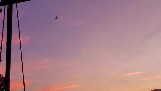 Watch and share Sunset GIFs and Bats GIFs by Crazy Cody's Creatures  on Gfycat