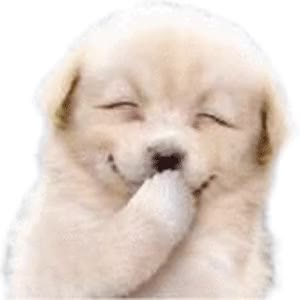 Watch dog GIF on Gfycat. Discover more dog GIFs on Gfycat
