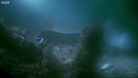 Watch and share Eel GIFs on Gfycat