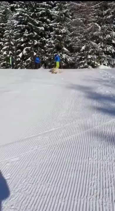 Watch and share Snow GIFs and Dog GIFs by funnyvidspage on Gfycat