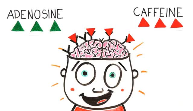 Watch and share Your Brain On Coffee GIFs on Gfycat
