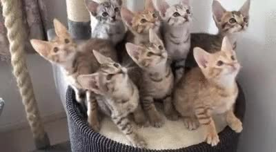 Watch and share Kittens GIFs by Reactions on Gfycat