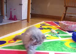 Watch feed me scorpions GIF on Gfycat. Discover more but also so dumb, cat, cats are great, gifset, persian kitten GIFs on Gfycat