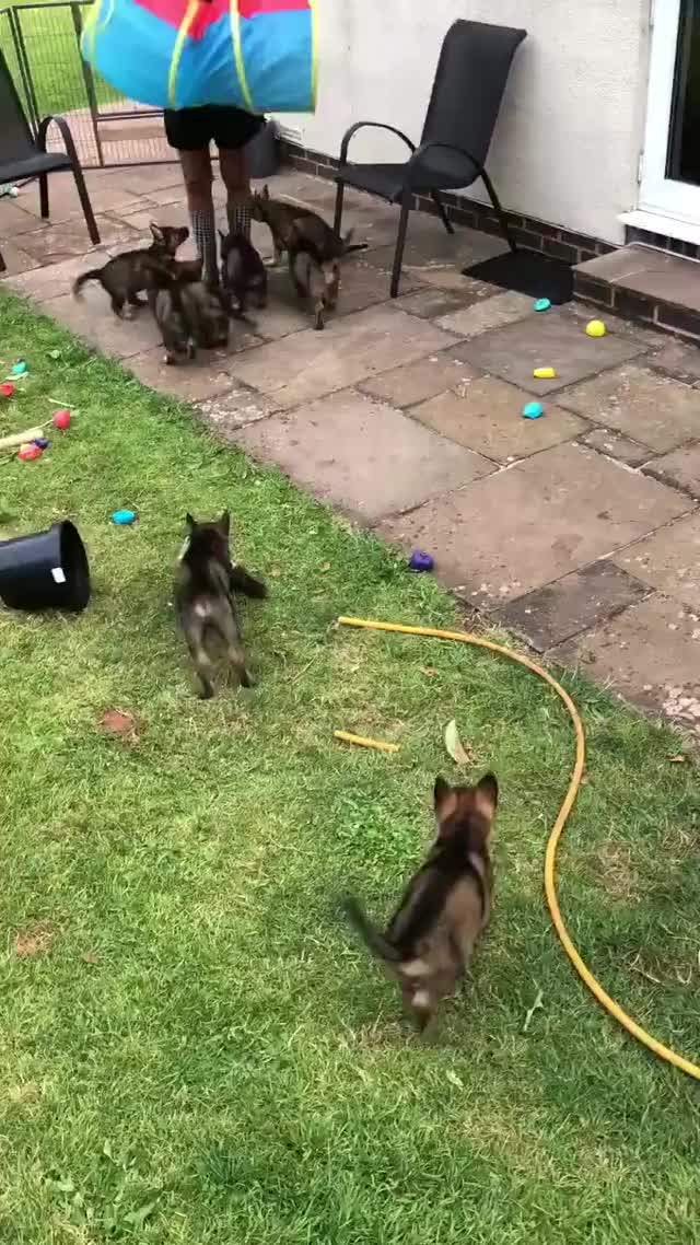 Watch and share Source:  DC_PoliceDogs On Twitter GIFs by Nomorefoxgiven on Gfycat