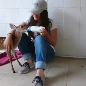 Watch /r/suckysucky - from aidereh_f GIF by @cakejerry on Gfycat. Discover more aww, baby animals, cute, deer GIFs on Gfycat