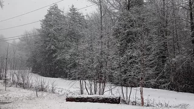 Watch and share Hermits' Haven April Snowfall #2 GIFs by hermits-haven on Gfycat