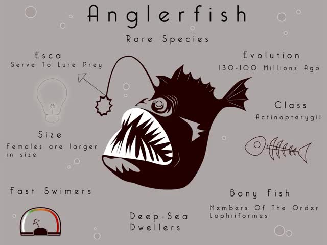 Watch and share Ode To The Anglerfish, The Deep's Most Underappreciated Fanged Fish GIFs on Gfycat