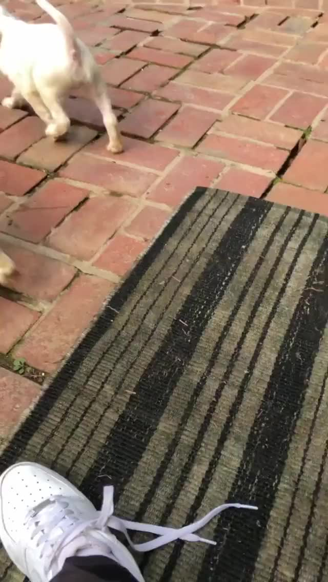 Watch and share Elizabethcturner - 2019-10-30 01:57:03:836 GIFs by Charles Carmichael on Gfycat