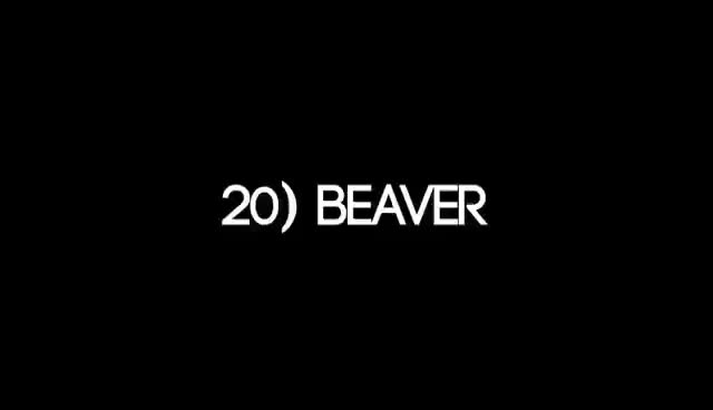 Watch this trending GIF on Gfycat. Discover more beaver GIFs on Gfycat