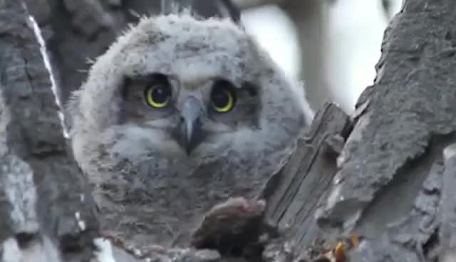 Watch owl GIF on Gfycat. Discover more cute, owl GIFs on Gfycat