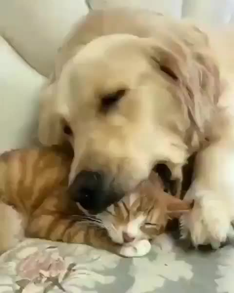 Watch and share Eyebleach GIFs and Aww GIFs by notmyproblem on Gfycat