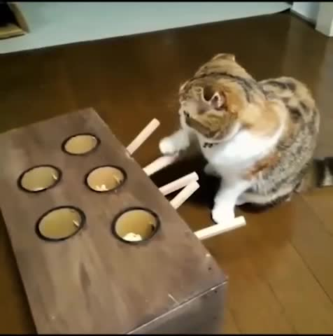 Let me help!  GIFs