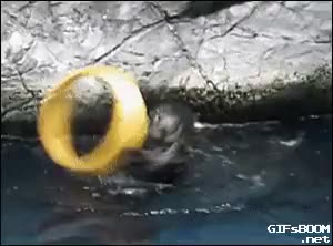 Watch and share MRW I'm An Otter Putting On A Lord Of The Rings Theater Performance And My Bitter Understudy Keeps Trying To Interrupt The Play (reddit) GIFs on Gfycat