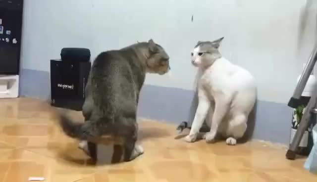 Top 30 Video For Cats Gifs Find The Best Gif On Gfycat