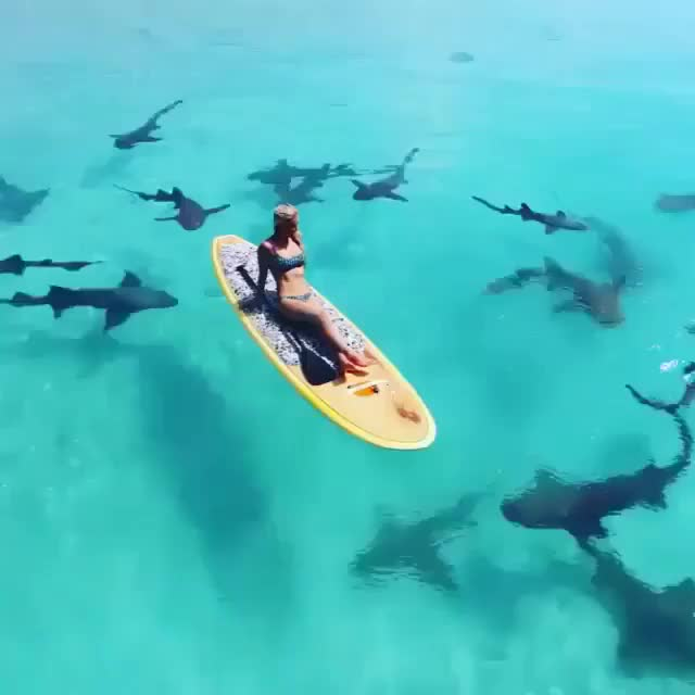 Watch and share Sharkbait, SUP! GIFs by Jackson3OH3 on Gfycat