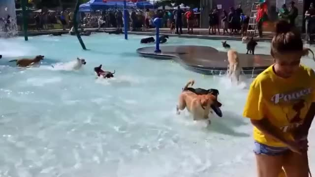 Watch and share Public Pool Throws A Dog Party Before Closing For The Season GIFs by HoodieDog on Gfycat