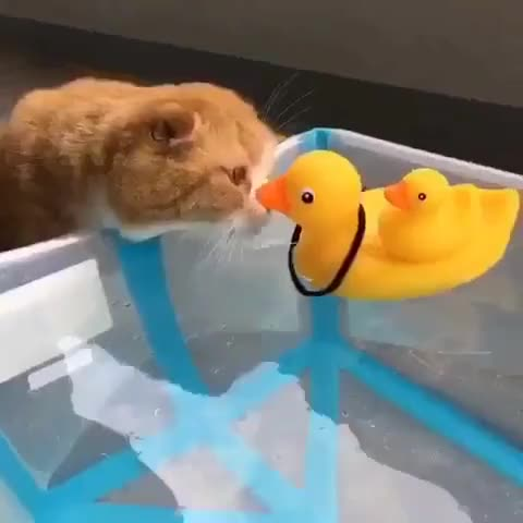 Watch Ducky GIF on Gfycat. Discover more related GIFs on Gfycat