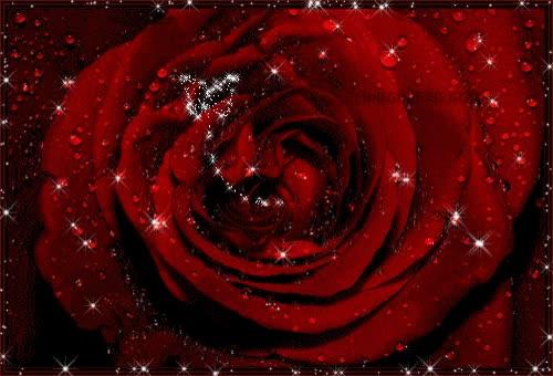 Watch and share Rosa Roja Con Gotas De Rocío GIFs on Gfycat