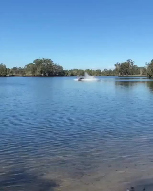Watch and share Gliding Across The Water GIFs by mossberg91 on Gfycat