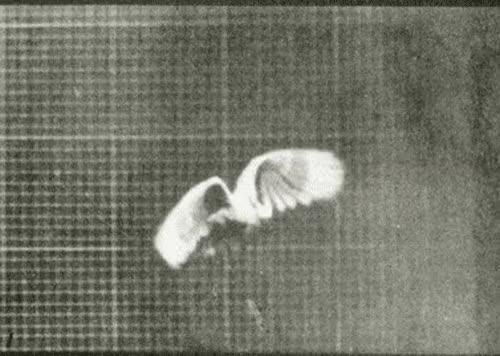 Watch and share Eadweard Muybridge Motion Photographs GIFs on Gfycat