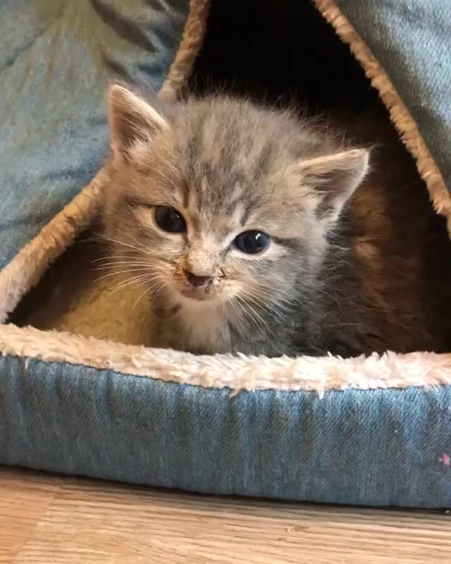 Watch and share Kittenvideo GIFs and Goodmorning GIFs by vani  on Gfycat