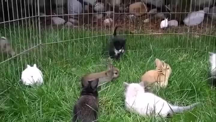 Kittens&Bunnies GIFs