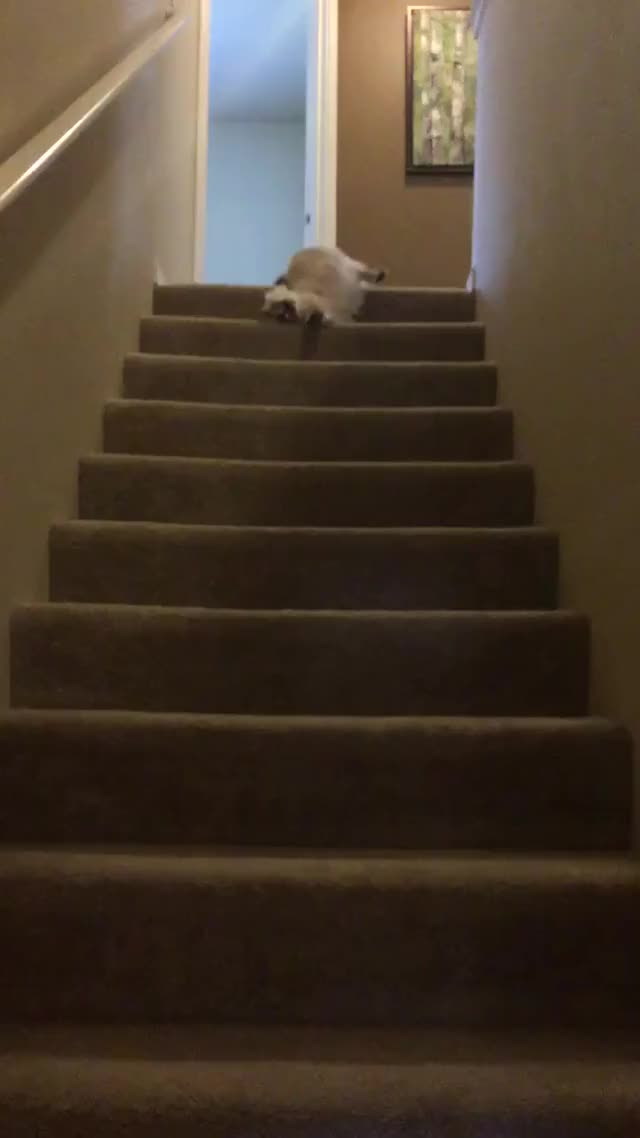 Watch and share Stairs GIFs and Cute GIFs on Gfycat