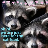 Watch and share Lol Raccoons GIFs on Gfycat