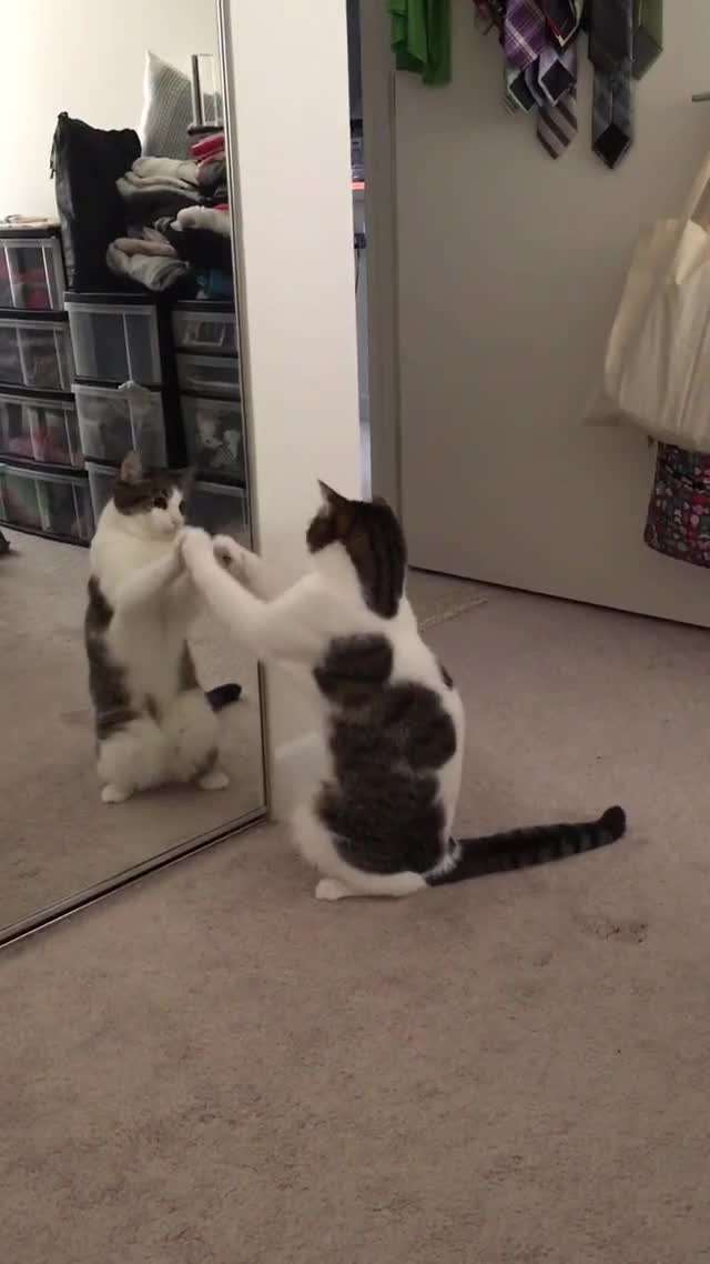 Watch this cat GIF on Gfycat. Discover more cat, cute, gifs, kitten, kitty, mademesmile GIFs on Gfycat