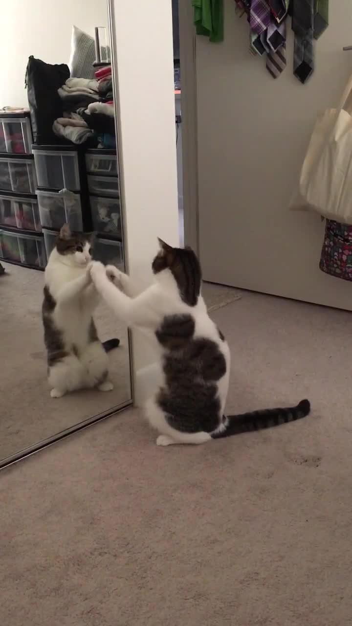 cat, cute, gifs, kitten, kitty, mademesmile, Cat. (reddit) GIFs