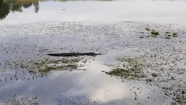 Watch 20180505 190203 GIF on Gfycat. Discover more related GIFs on Gfycat