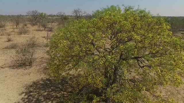 Watch and share Cassia Rise GIFs by Londolozi Game Reserve on Gfycat