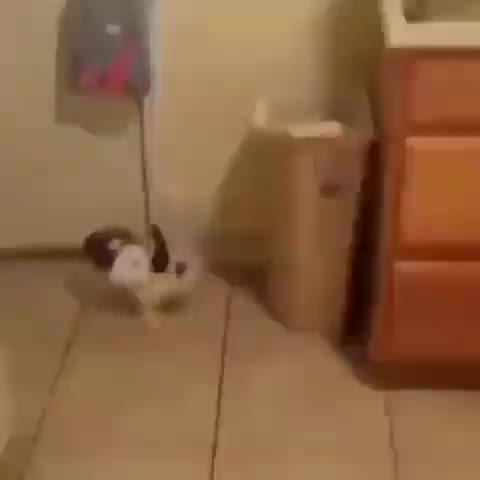 Watch and share Awwwww GIFs and Rabbit GIFs by tothetenthpower on Gfycat