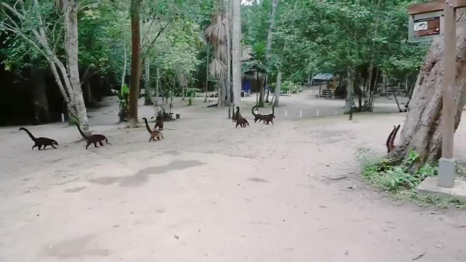 perebarcelo, Coatis are the new dinosaurs GIFs