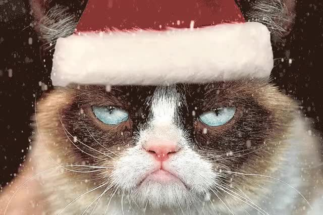 Watch and share Grumpy Cat Christmas By Michu GIFs on Gfycat
