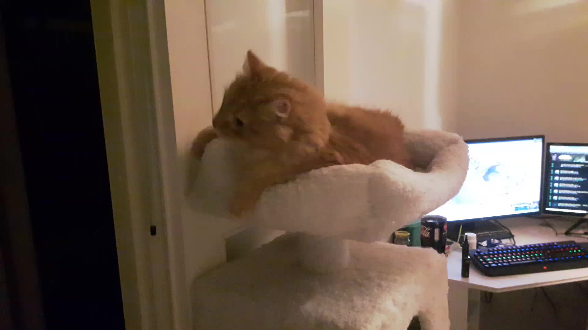 suomi, Cat. GIFs
