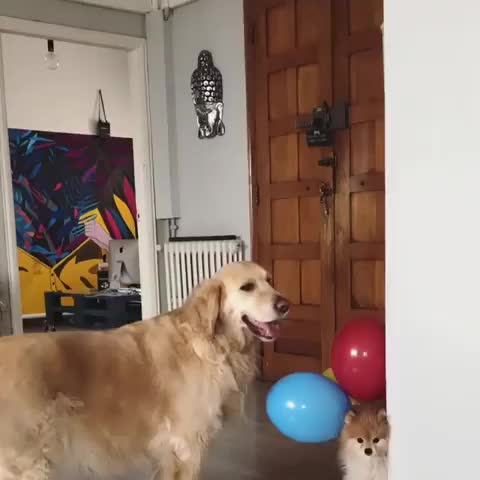 Up up and away! GIFs