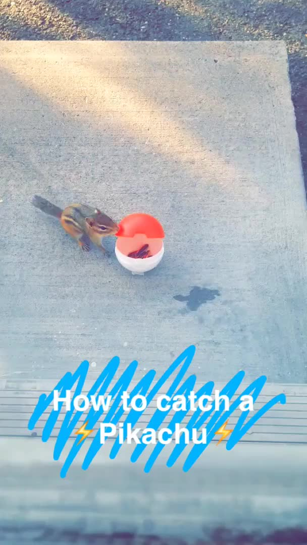 Watch and share Pokemongo GIFs and Chipmunk GIFs by joaquinoaphoenix on Gfycat