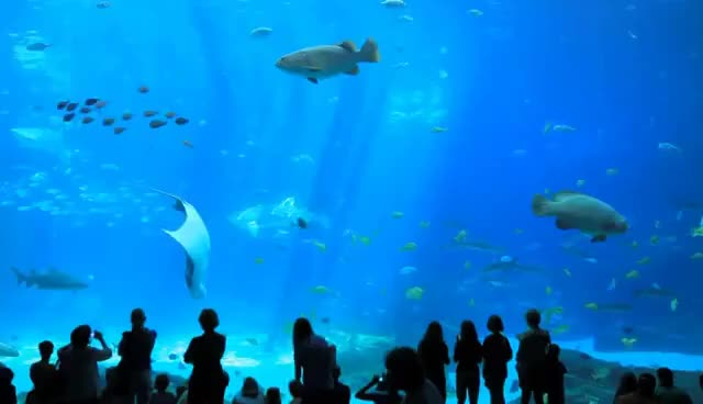 Watch and share The World's Largest Aquarium // Georgia Aquarium // Atlanta GA GIFs on Gfycat