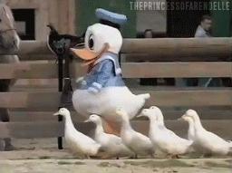 Ducks GIFs