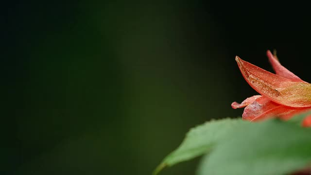 Watch hummingbird GIF by @fliesatnight on Gfycat. Discover more related GIFs on Gfycat